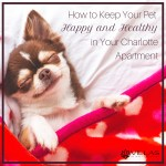 wpid-how-to-keep-your-pet-happy-and-healthy-in-your-charlotte-apartment-square.jpg