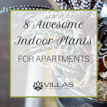 wpid-vmc-8-Awesome-Indoor-Plants-for-Apartments.png