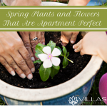 wpid-vmc-Spring-Plants-and-Flowers-That-Are-Apartment-Perfect.png